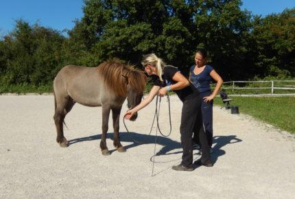 groundwork_islandic_horse