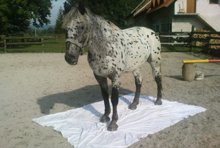 horse_habituation_sheet