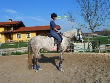 cavallista_endurance_posture_arab_mare_rider
