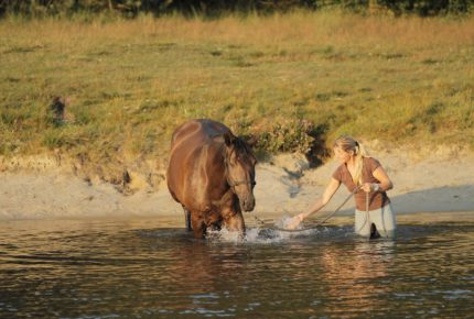 cavallista_horse_bathing