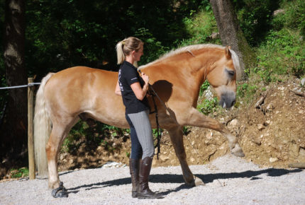 horse_spanish_walk
