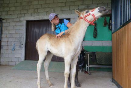 teaching_foal_basic_handling
